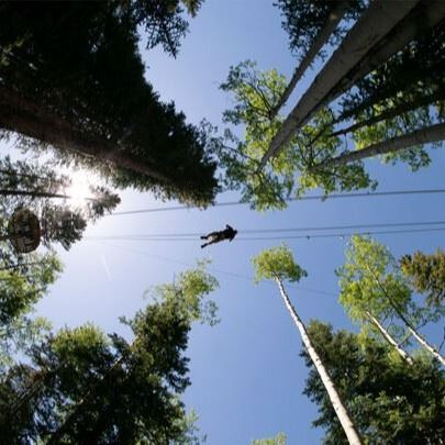 Looking up to sky through trees under a zip liner